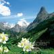 edelweiss_2.jpg