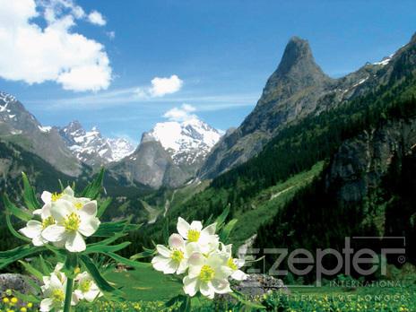 Alpská protěž