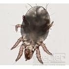 Obrázek #1, Prach, hrozba pro naše zdraví